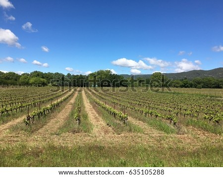 Sustainable Vineyards in Provence, France