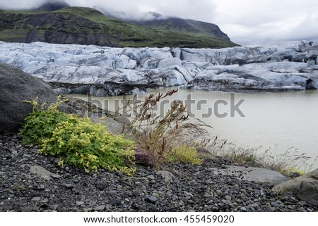 Svinefellsjokull outlet glacier in Iceland, shot on a overcast day in summer. Textured ice and blue color cast  - stock photo