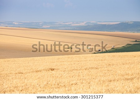 Svishtov - June 20: Agricultural landscape - harvesting wheat from large agricultural areas against the blue sky on June 20, 2015 Svishtov, Bulgaria