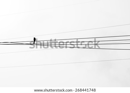 Swallow bird on a wire - stock photo