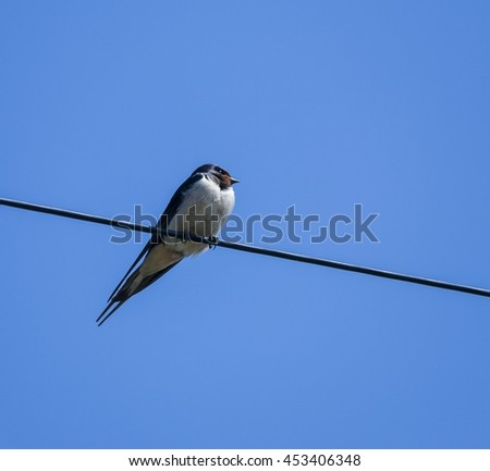 Swallow sitting on a wire - stock photo