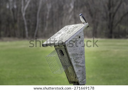 Swallows courting on top of a wooden bird box - stock photo