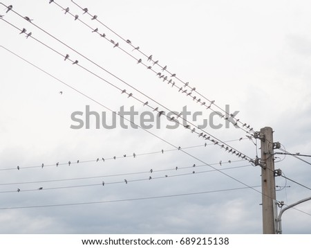 swallows on a power wire