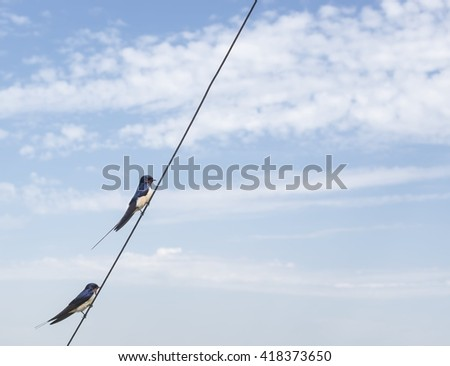 Swallows on a wire - stock photo