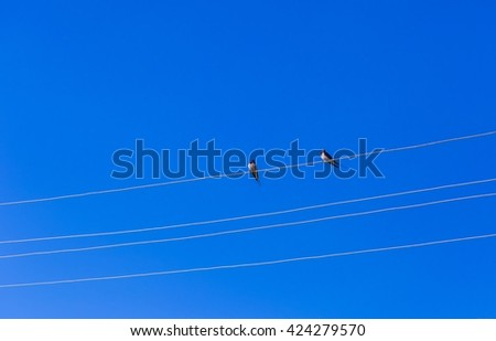 Swallows sitting on power lines on blue sky background. Birds on sky backgrounds - stock photo