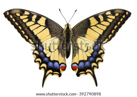 Swallowtail (Papilio machaon) isolated on white - stock photo