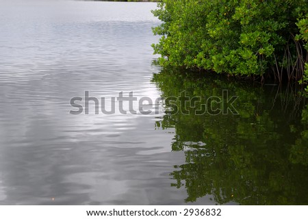 swamp - stock photo