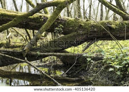 Swamp - stock photo