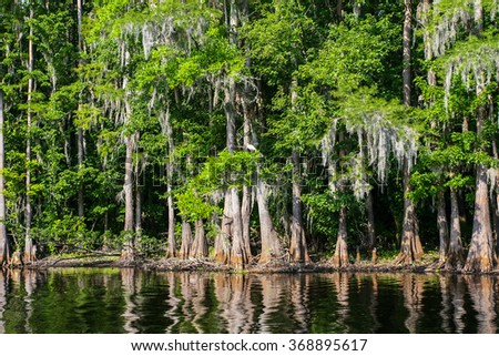 Swamp forest with trees reflecting in the water