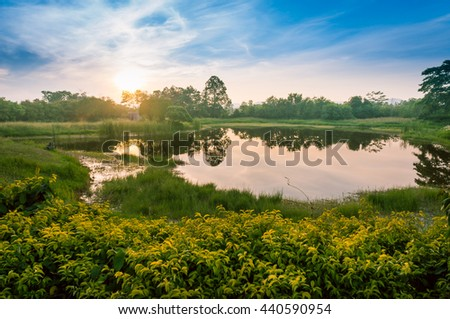 Swamp, green gress and yellow flower at Sunrise