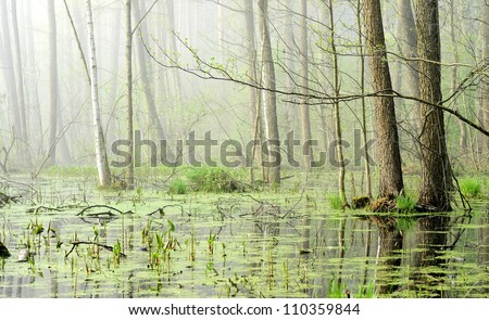 swamp in fog at the sunrise - stock photo