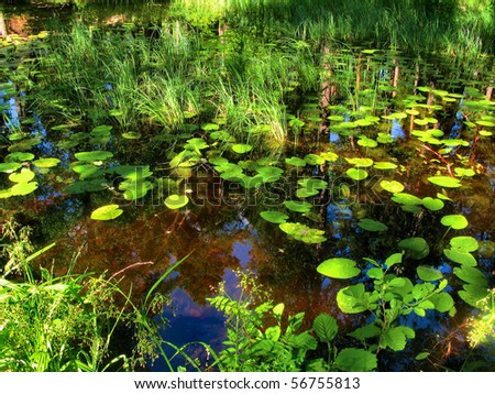 Swamp in the forest with reflexion - stock photo