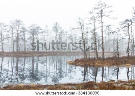 Swamp lake in fog early morning - stock photo