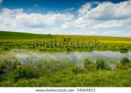 swamp landscape with iris flowers