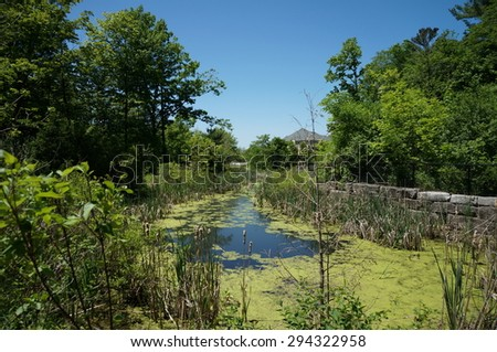 swamp pond in a park - stock photo