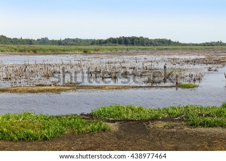 swamp, the end of summer  - stock photo