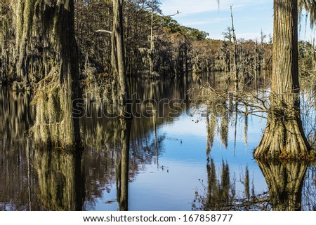 Swamp water and trees covered in moss with reflections in the water.