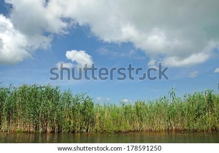 Swamp with sedge vegetation in the Danube Delta, Romania - stock photo