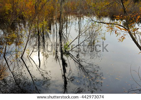 Swamp with Trees and Sun reflected in the water during Fall - stock photo