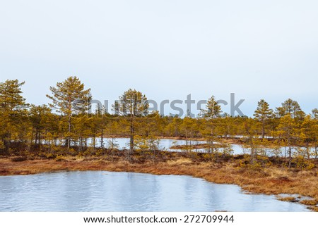 Swamps and pine forest in the early spring, Estonia - stock photo