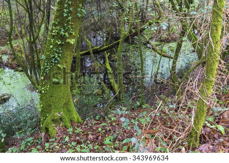 Swampy area near a river in Galicia (Spain) - stock photo