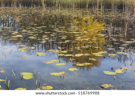 Swampy Lake Autumn Reflections