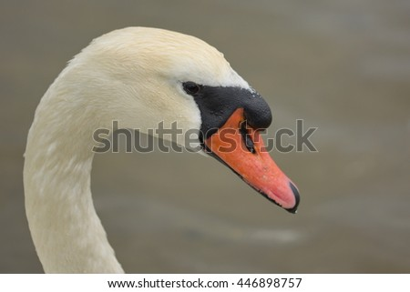 swan head makro background