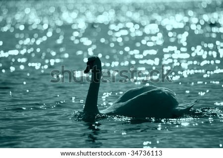 Swan in a night lake with pathes of moonlight