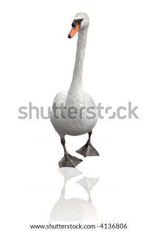 Swan isolated on white - stock photo