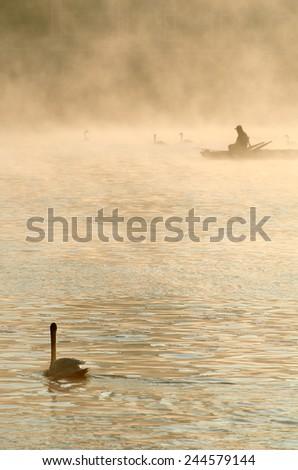 Swan looking on a fisherman in a morning mist, Prague, Czech Republic - stock photo