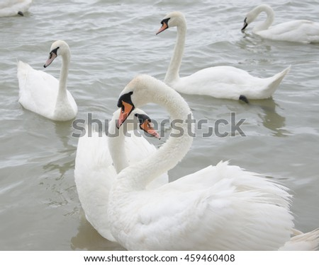 swan on blue lake water in sunny day, swans on ponds - stock photo