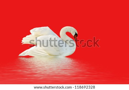 Swan on the red surface. - stock photo
