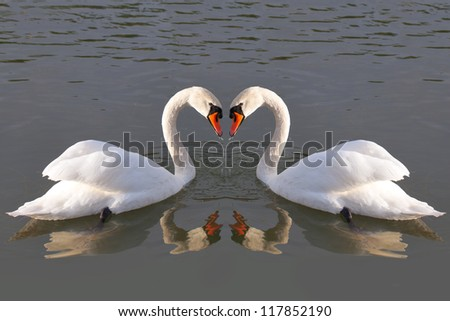 Swan`s heart. - stock photo