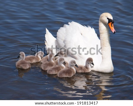 Ugly Duckling Stock Images RoyaltyFree