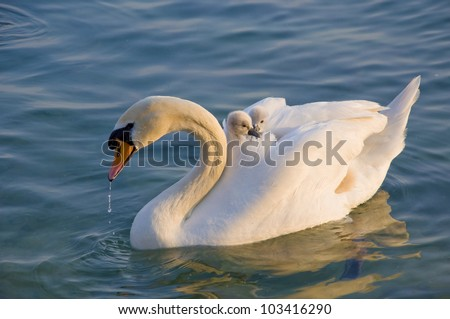 Swan with cups
