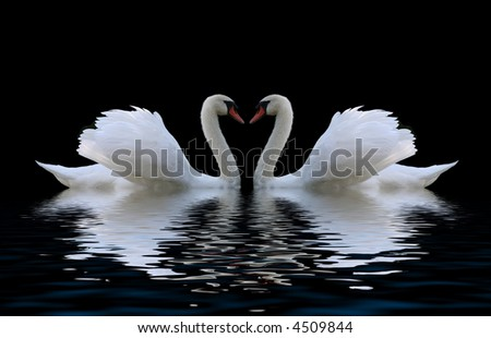 swans heart - stock photo