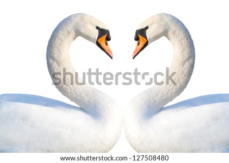 Swans heart isolated on white. - stock photo