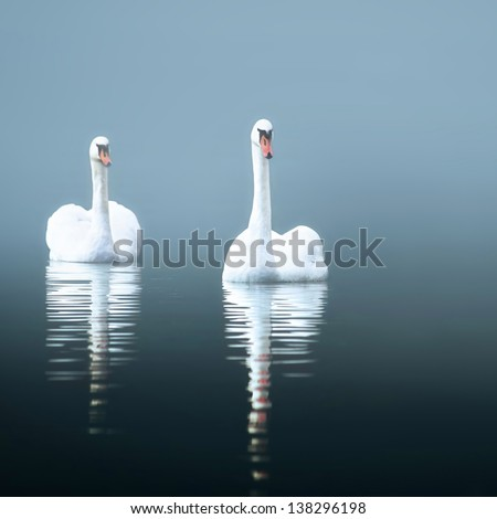 Swans in the misty lake - stock photo