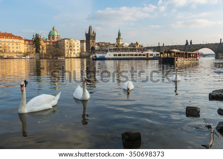 Swans in Vltava river at sunset, Prague