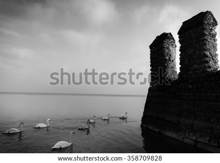 Swans next to a castle wall (fine art) - stock photo