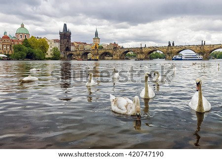 Swans on the background of Charles Bridge in Prague, Czech Republic