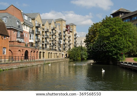 Swans on the Kennet and Avon Canal in Reading, Berkshire.  Modern apartments and office blocks have been built along the banks of this historic waterway, viewed on a sunny day in September. - stock photo