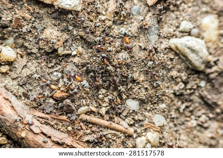 Swarm Colony Of Ants Searching For Food