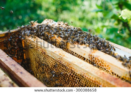 Swarm of bees on beehive with wooden frames of honeycomb inside, on the green background, close up - stock photo
