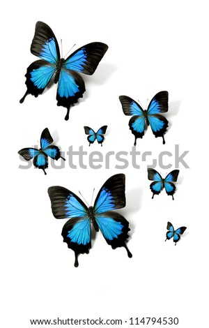 Swarm of butterflies papilio ulysses isolated on white - Mountain Swallowtail - stock photo