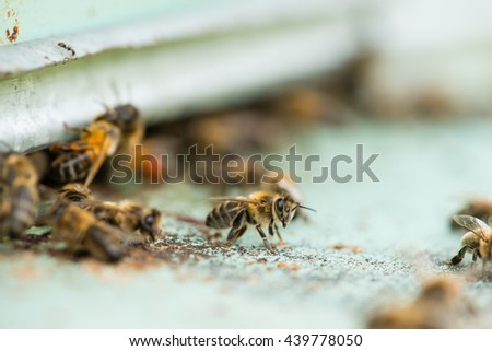 Swarm of honeybees coming and going around beehives in a bee farm - stock photo
