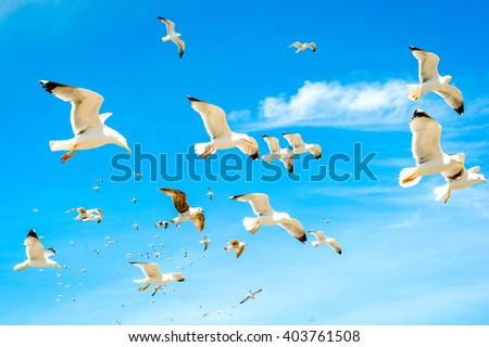 Swarm of sea gulls flying close to the beach - stock photo