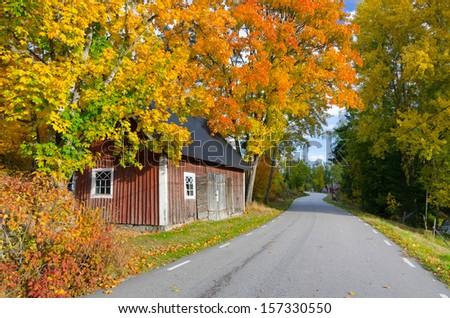 Swedish autumn contrasts - stock photo