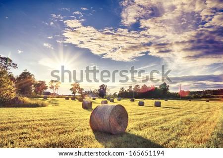 Swedish farming - stock photo