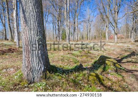 Swedish spring natural symbols - stock photo